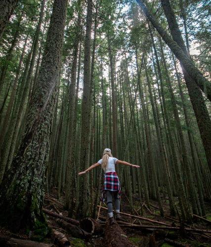 Frau balanciert über Baumstamm im Wald