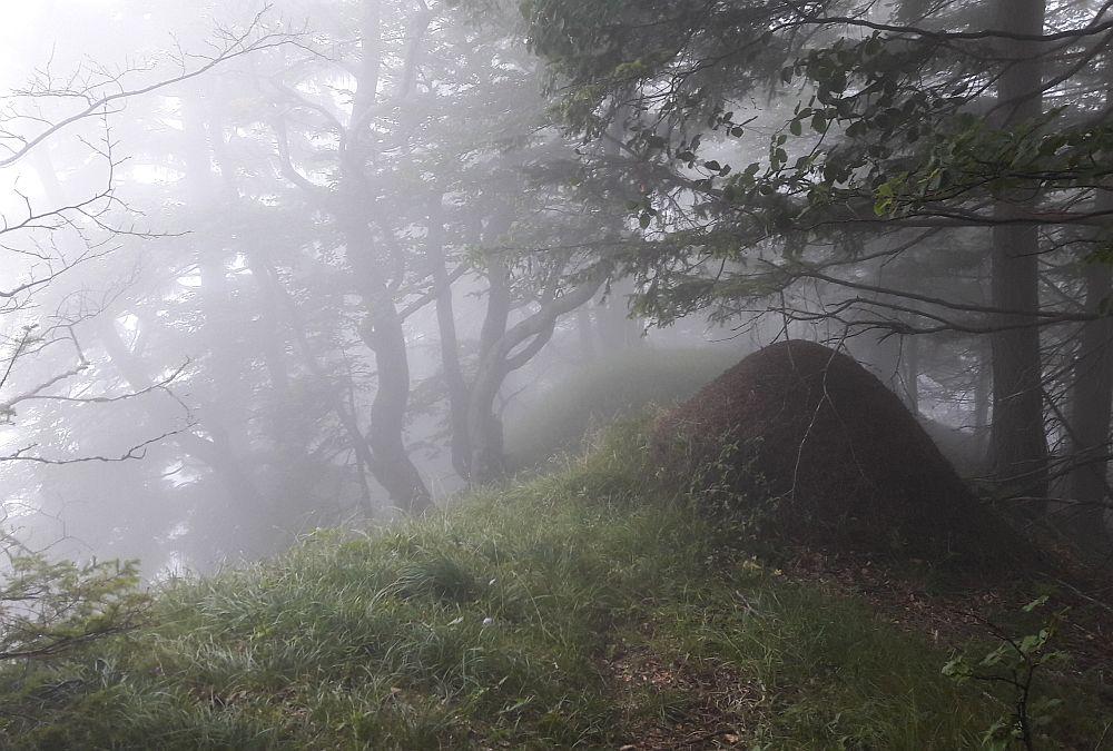 Nebel – Leben im Dazwischen